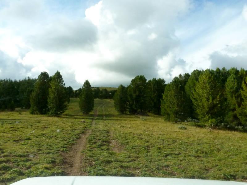 20180814. На обратном пути через лесочек между вершинами хребта Камза.