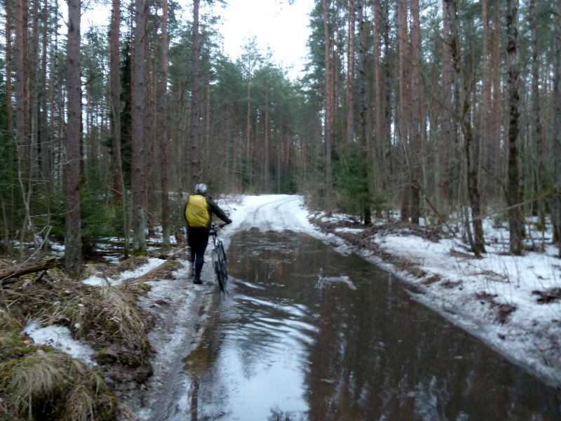 20150329. Пробираемся лесными дорогами на правом берегу реки Нева, от Мурманского шоссе до посёлка Дубровка.