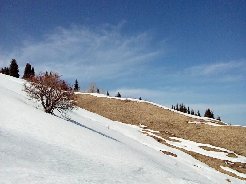 20160306. У тропы в урочище Кок-Жайляу, в её первой трети протяжённости от Малоалматинского ущелья до урочища как такового.