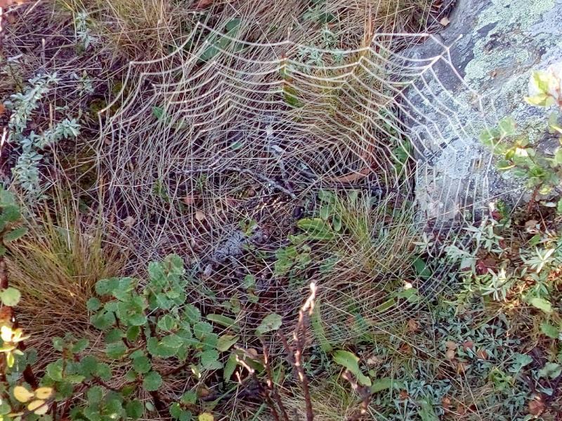 20180810. Кружева паутины.
