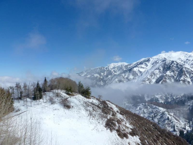 20160320. На тропе Кок-Жайляу, примерно в середине пути от Малоалматинского ущелья до начала урочища.