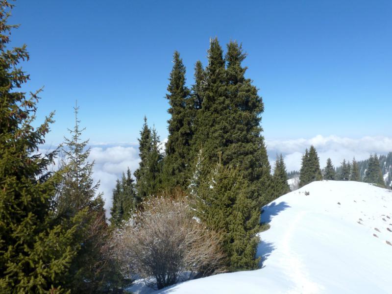 20160320. Лесок на северном хребте урочища Кок-Жайляу.