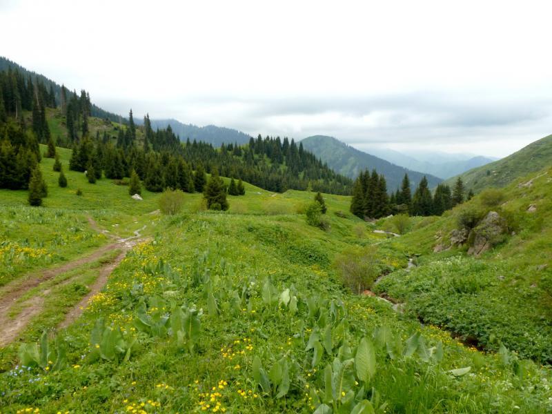 20160529. В начале спуска с Кок-Жайляу в сторону ущелья реки Большая Алматинка.