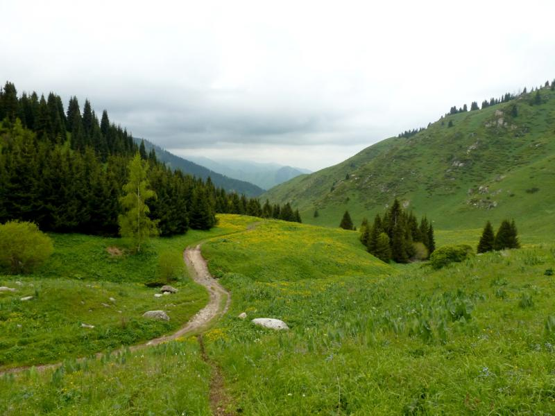 20160529. Где-то в средней части спуска с урочища Кок-Жайляу в ущелье речки Большая Алматинка.