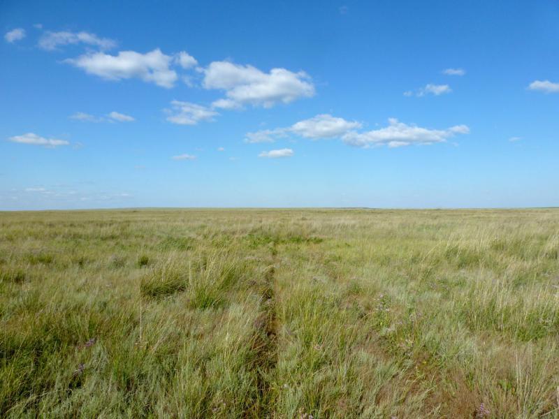 20160805. Степная дорога, какие сотнями тысяч колей прочертили территорию Казахстана.