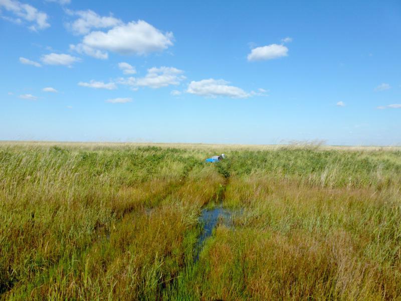 20160805. Степная дорога пересекающая ручей в низине солёного озера Сарыколь.
