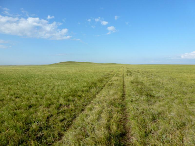 20160806. Полузаросшая степная дорога от солёного озёра Кызылколь к селу Бозтал.
