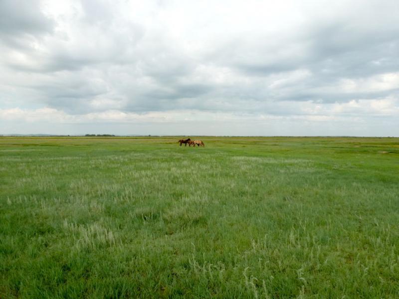 20160806. Зеленеющий луг в пойме речки Оленты.