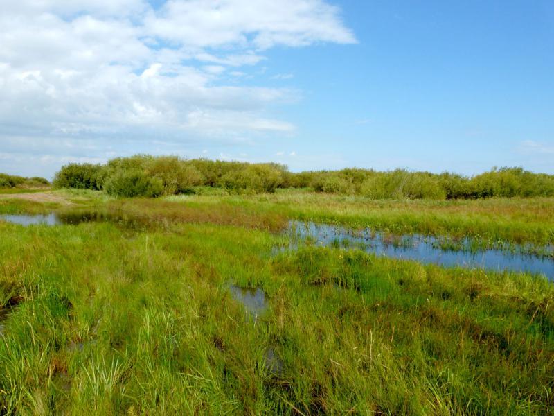 20160806. У дамбы в пойме речки Оленты, во время половодья.