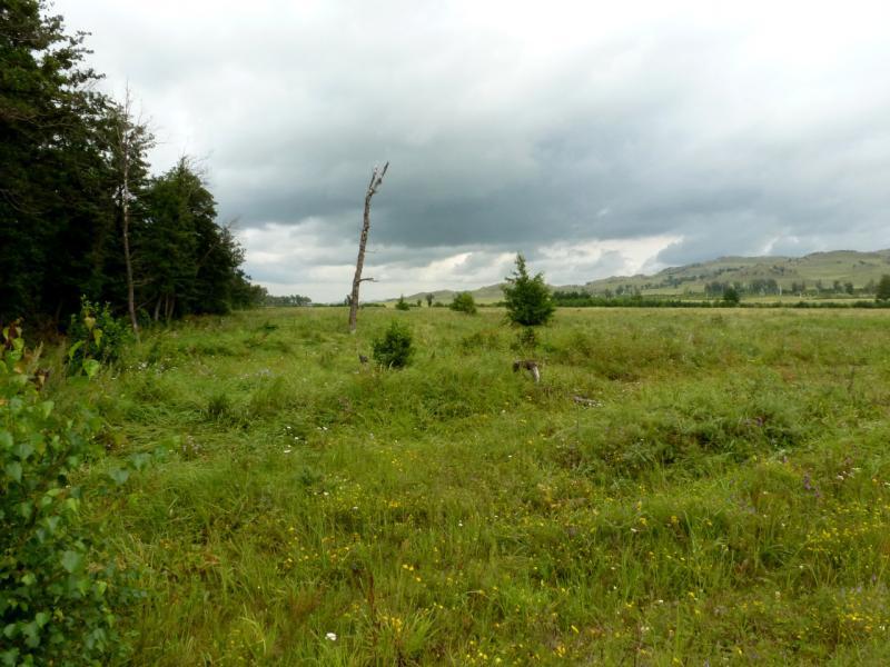 20160807. У берёзово-ольховой рощи на берегу речки Карабулак, в предгорьях Буйратау.