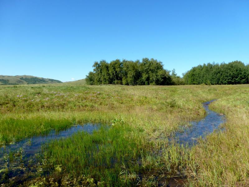 20160808. Один из ручьёв, питающих речку Узынкашкан между массивами гор Ерейментау и Буйратау.