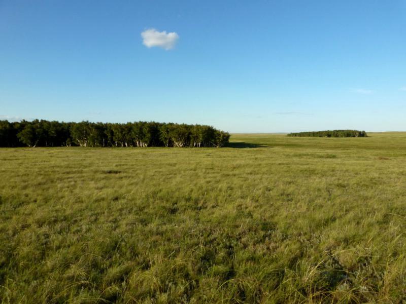 20160808. Берёзовые рощи в урочище Байкутты, недалеко от Соколиных гор.