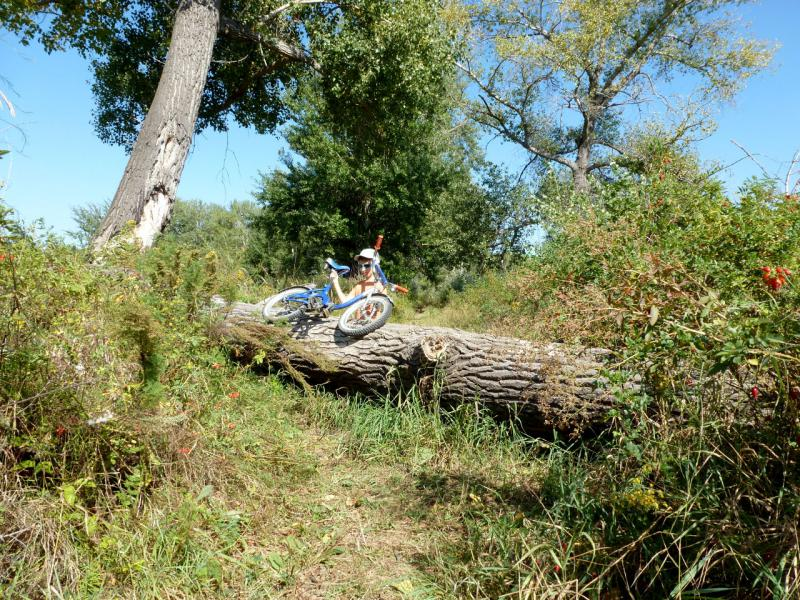 20160904. Мой восьмилетний сын форсирует завал лесной дороги.