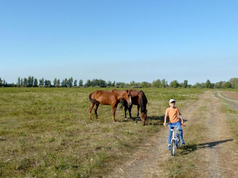 20160904. Сына и лошадки.