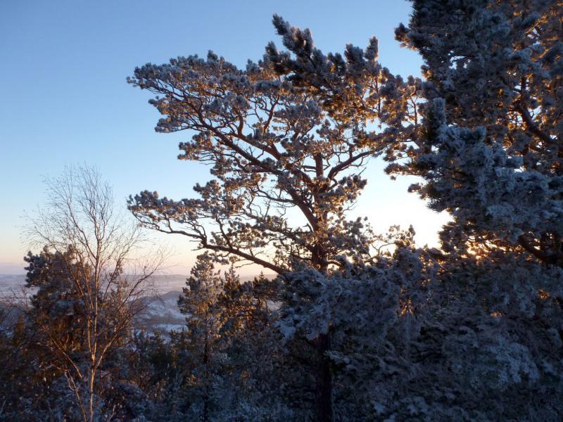 20170115. На закате в баянаульском лесу зимой.