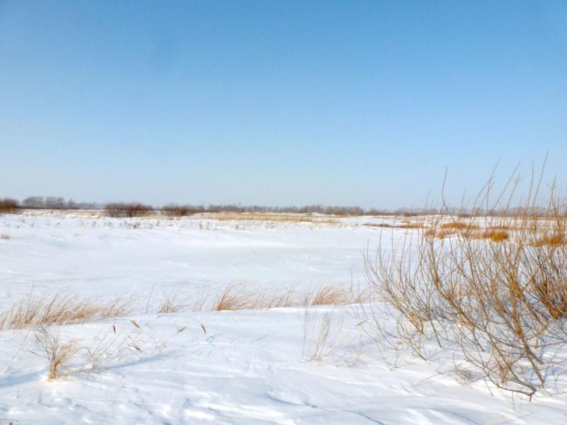 20170129. У одной из замёрших проток на Некрасовском острове.