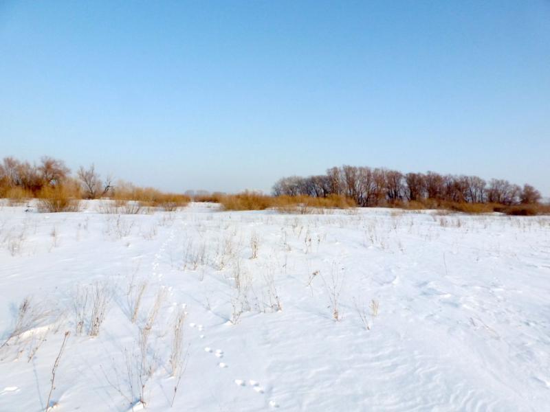 20170129. Следы зверьков на снегу, и их немало тут (от зайцев до косуль, также есть лисы и волки).