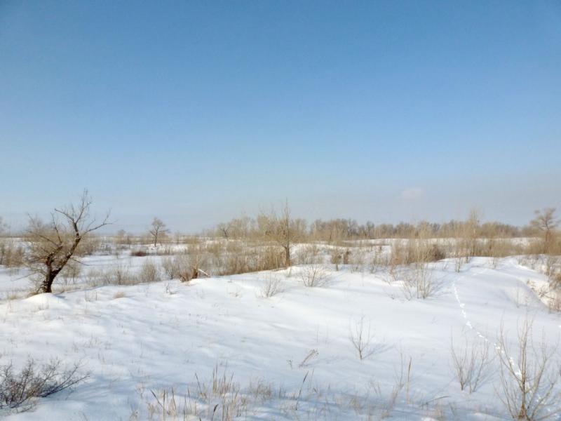 20170218. На правом берегу реки Иртыш, неподалеку от города Аксу.