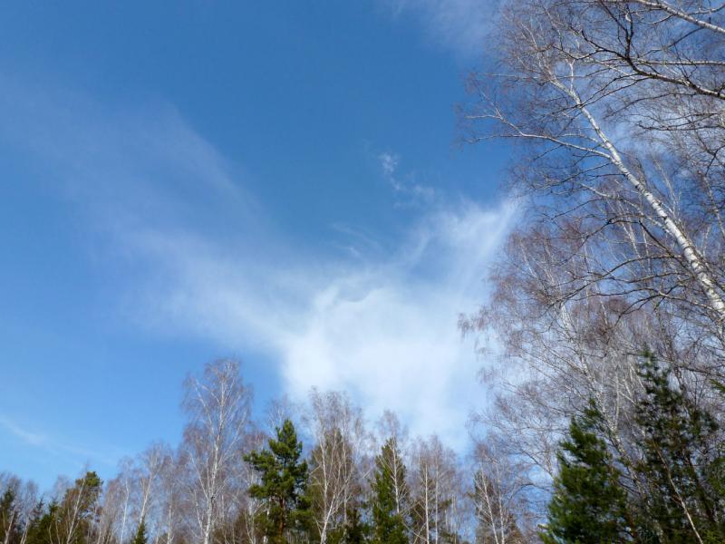 20170422. Небо в погожий день над новосибирским Академгородком.