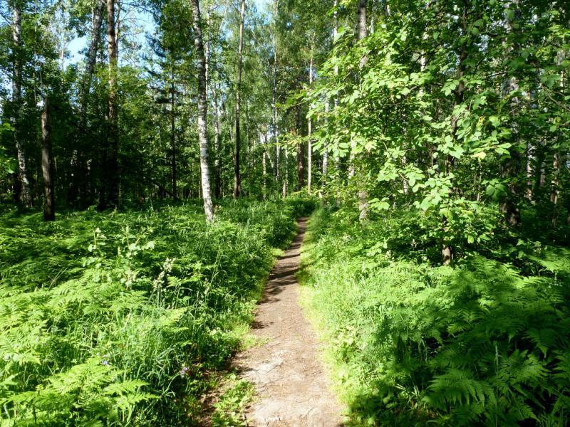 20170624. На одной из лесных тропинок вокруг новосибирского Академгородка.