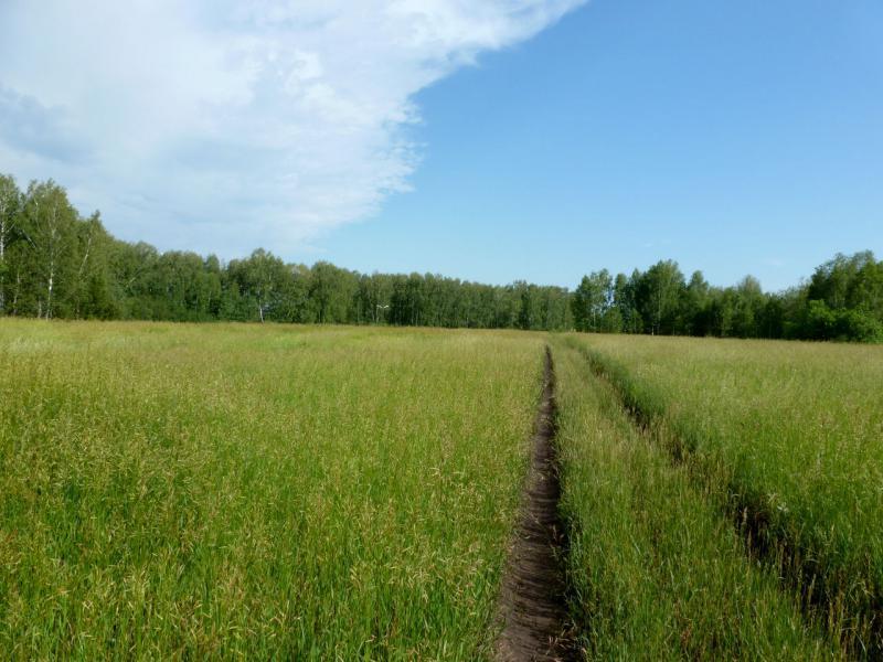 20170624. В лесочке около посёлка Сосновка, в непосредственной близости от новосибирского водохранилища.