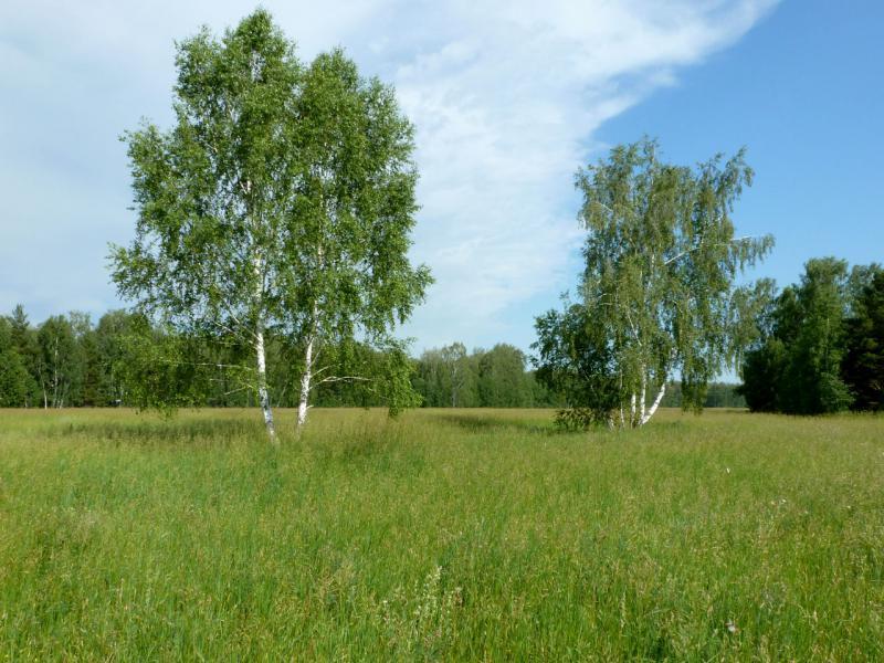20170624. Обычный вид для леса под Бердском.