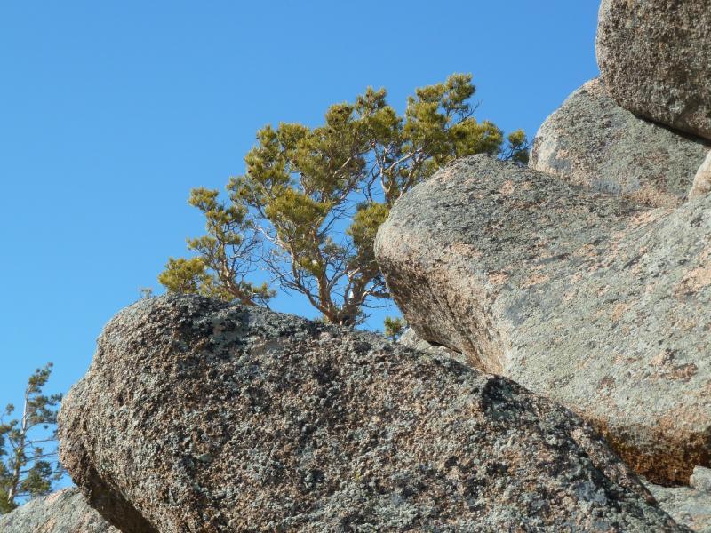 20110321: Нагромождение камней на северном склоне горы Киишкий.