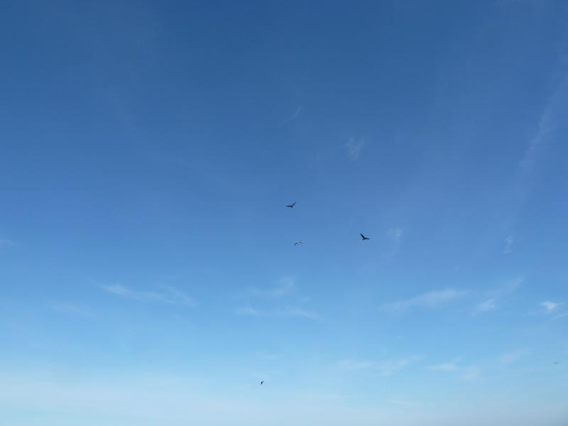 20110419. Чайки над озером, которого не должно быть.