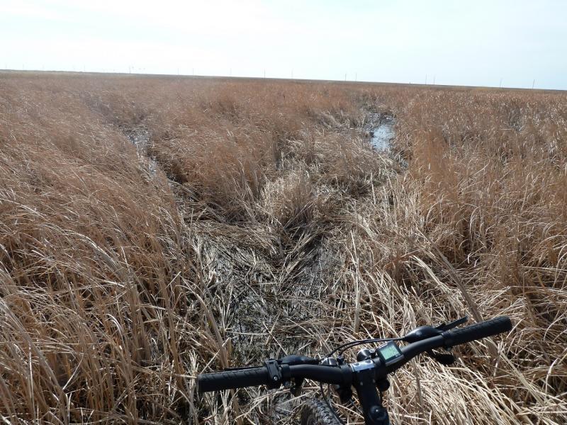 20110419. Дорога истончилась в болоте.