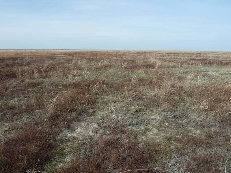20110419. Степно-болотистые просторы.