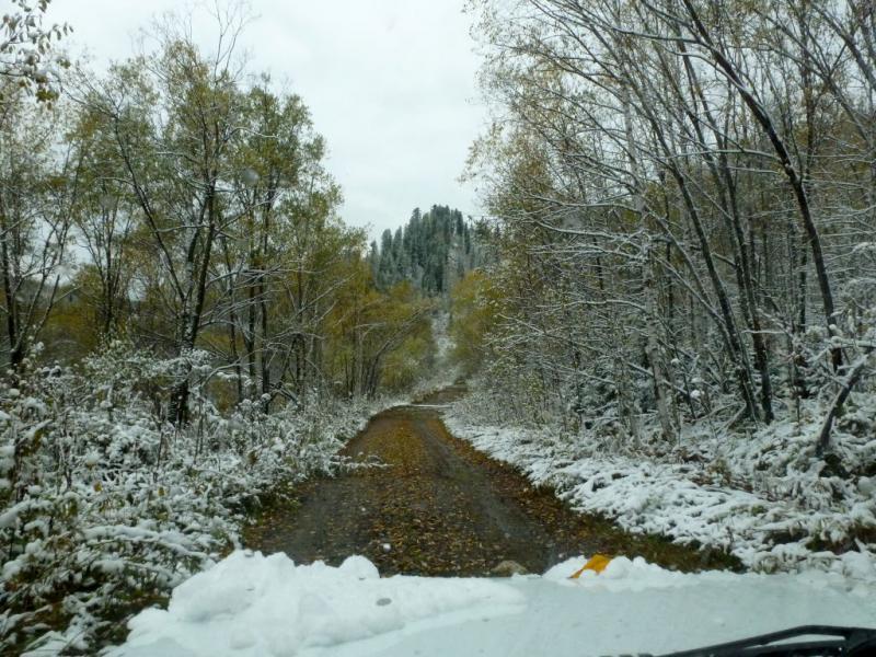 20170925. Дорога в лесу, вдоль горной речки Большая Березовка.