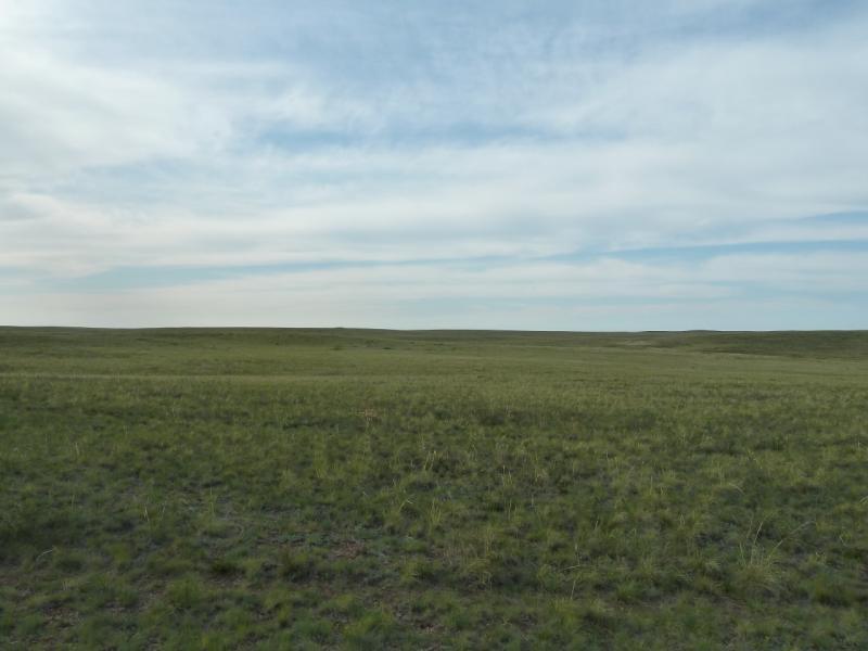 20110516. После озера спустились в низинку, зелёную, несмотря на солончаки.