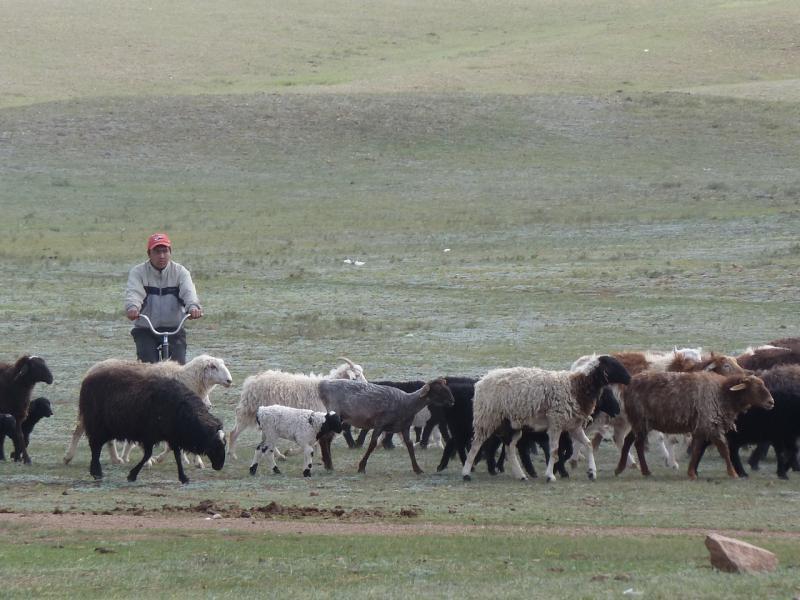20110517. В Жанажоле видели пастухов на велосипедах.