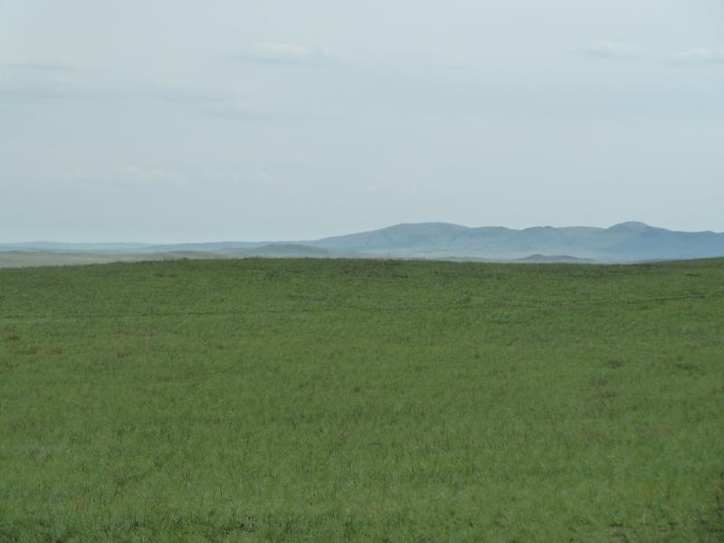 20110517. Зелень, ветер с гор.