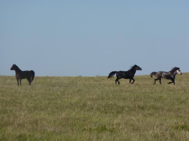 20110517. Так они за нами и следовали, на протяжении пары-тройки километров.