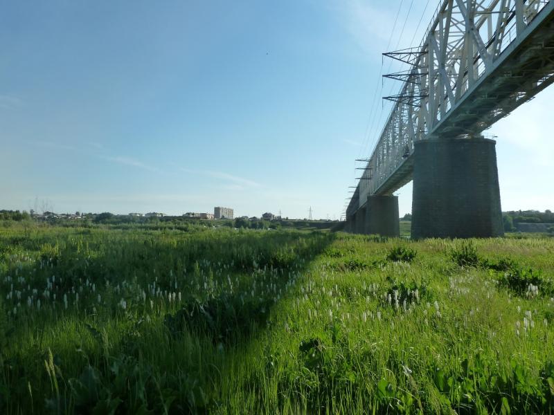 20110618. Вид с правого берега.