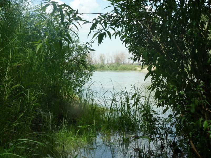 20110618. Ручеёк впадает в Иртыш.