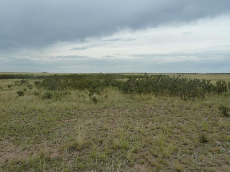 20110807. Павлодар-Астана. Роща карликовых деревьев.