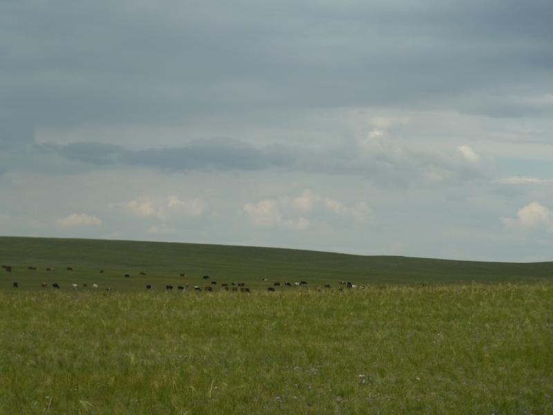20110810. Павлодар-Астана. Близ села Благодатное.
