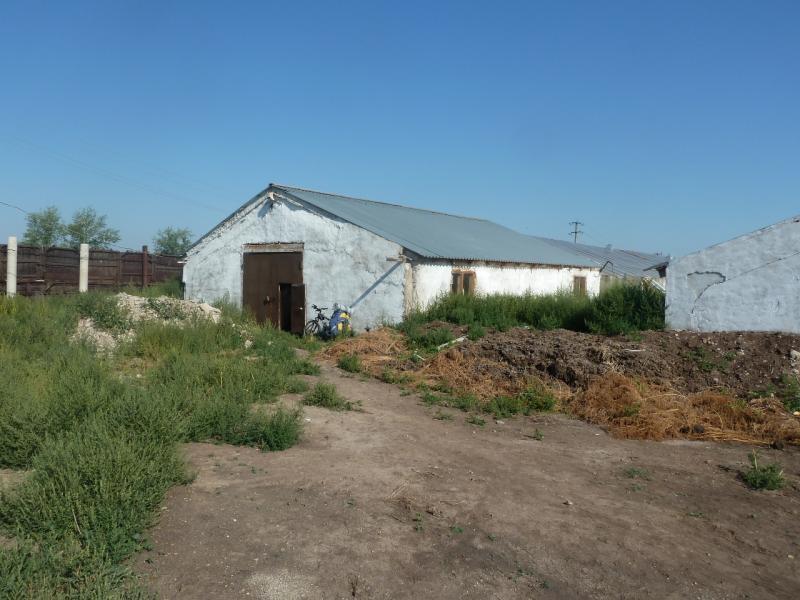 20110811. Павлодар-Астана. Здесь круглый год выращивают огурцы и помидоры.