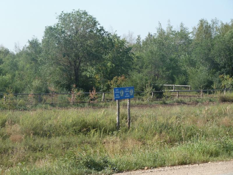 20110812. Павлодар-Астана. Лесопитомник у села Шубар.