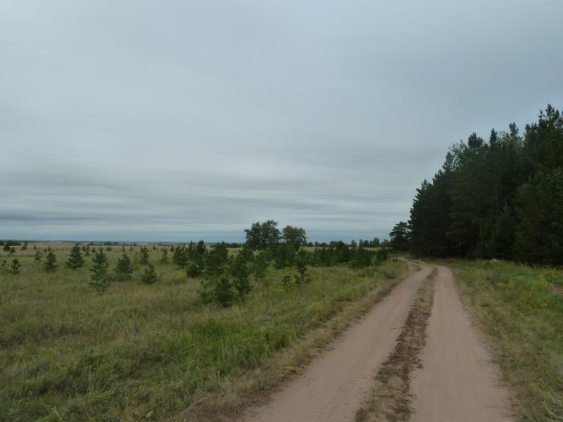 20110817. Астана-Боровое. Свежевысаженный лес.