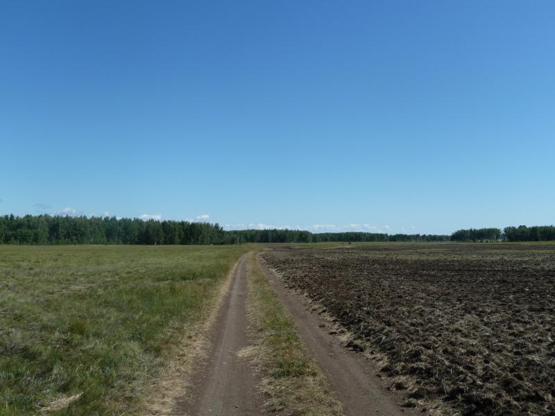 20110818. Астана-Боровое. Луга, поля, леса под Красным Кордоном.