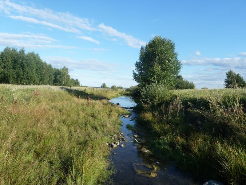20110818. Астана-Боровое. Такие ручейки поддерживают озеро Жукей.