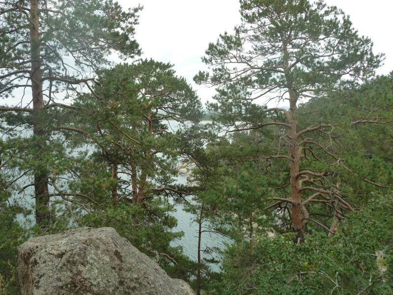 20110820. Боровое. Вид с тропы вдоль залива на юго-западной стороне озера Большое Чебачье.
