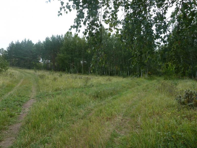 20110821. Боровое. Лесные дороги заповедника.