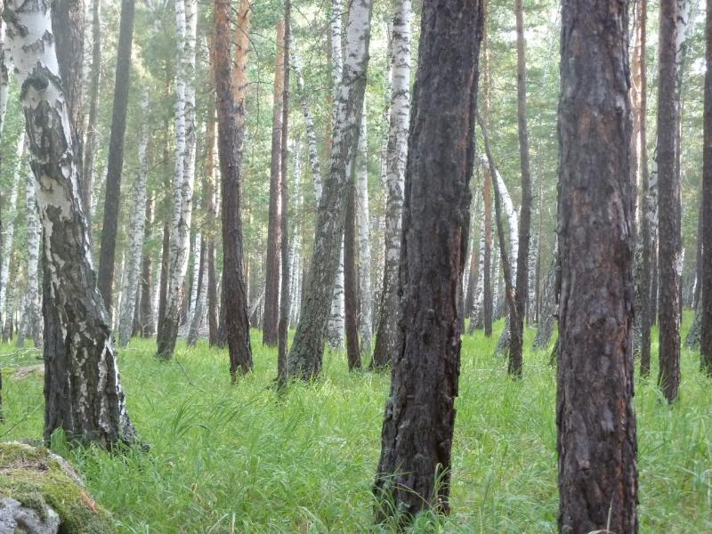 20110822. Боровое-Павлодар. В заповедном лесу Борового.