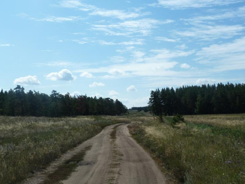 20110822. Боровое-Павлодар. Последние рощи Золотого Бора, перед озером Жукей.