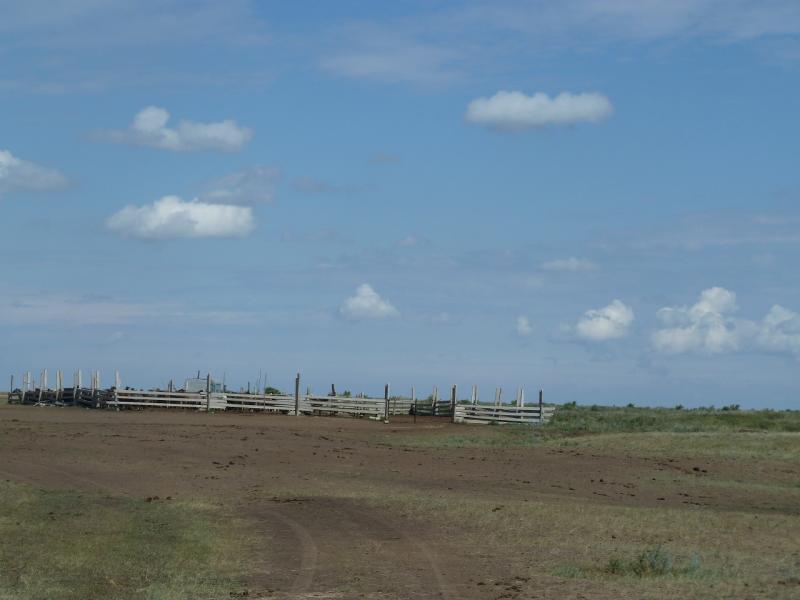 20110824. Боровое-Павлодар. Дикие загоны для скота на левом берегу реки Силети.