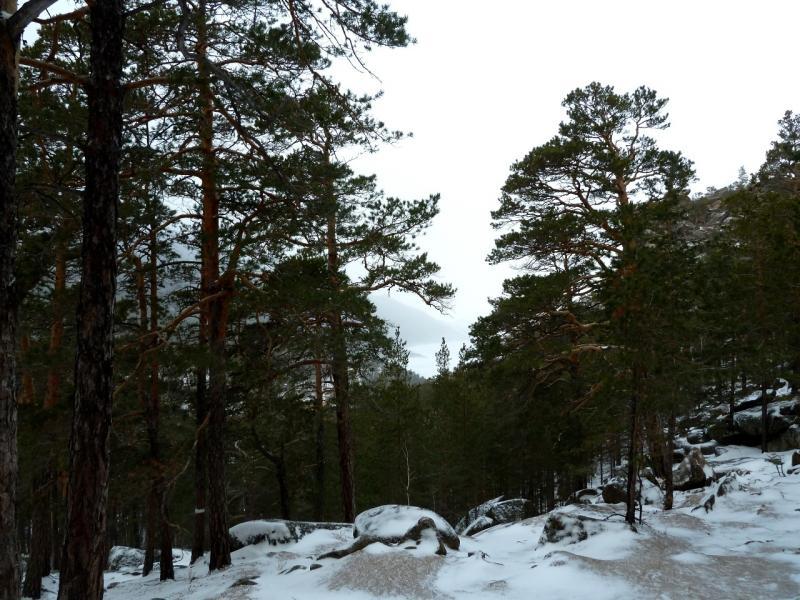 20111119. Боровое. Прогулка в снегопад. Вид на перешеек между Малым и Большим Чебачьими озёрами.